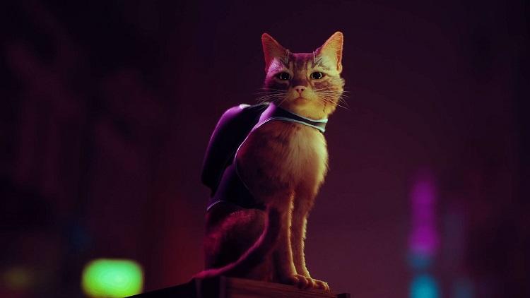 Stray, Outer Wilds и «ещё несколько сюрпризов»: Annapurna Interactive проведёт свою игровую презентацию