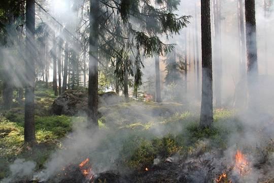 На всей территории Карелии введён режим ЧС из-за лесных пожаров