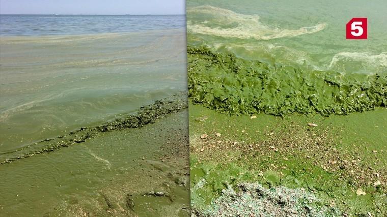 «Как кисель»: Черное море возле Одессы позеленело — видео