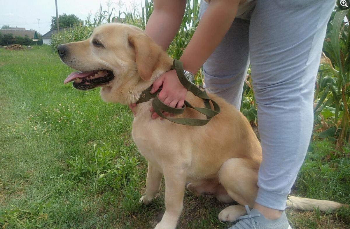 В Киевской области лабрадор после шести лет разлуки узнал своего хозяина
