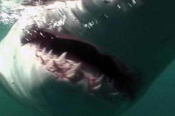 Рыбаки защитили мальчика от акулы