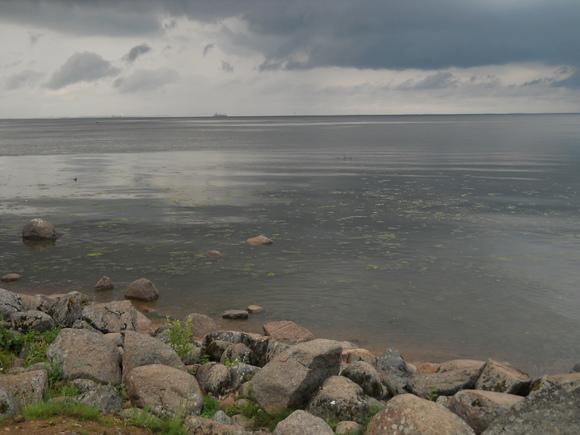 Из Финского залива в Петербурге выловили утопленника