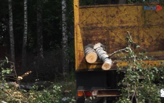 Следком продолжит проверку вырубки деревьев в Крутом Логу