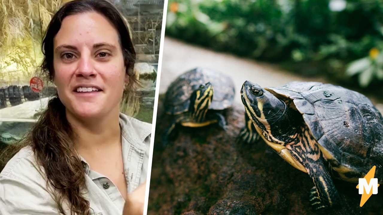 Годзилла, ты дочь потеряла. Блогерша подняла столетнюю черепаху, и зрители не могут развидеть в ней динозавра