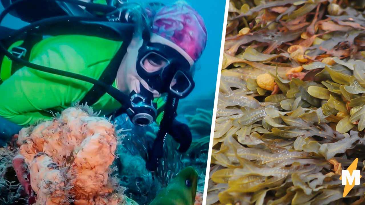 Дайвер думала, что увидела ходячие водоросли, но ошиблась. Это была рыба, и её вид — разрыв всех шаблонов