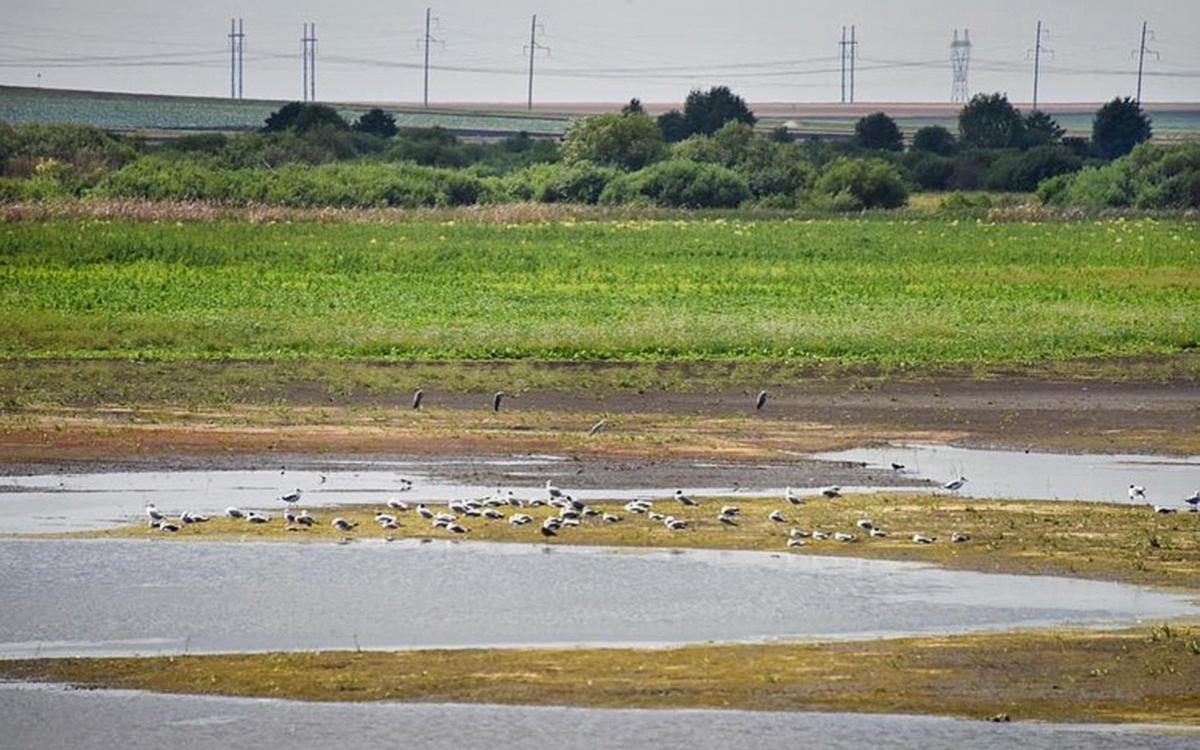 Куйвашев ввел ЧС из-за засухи в районах Свердловской области
