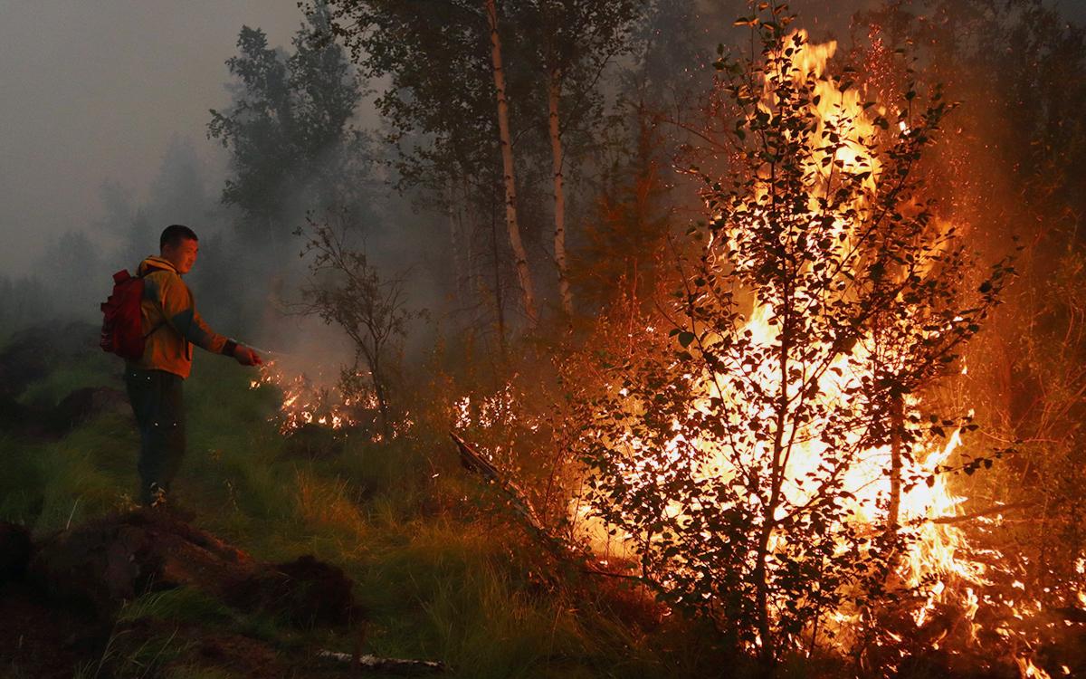 Путин предложил передать полномочия по лесоохране на федеральный уровень