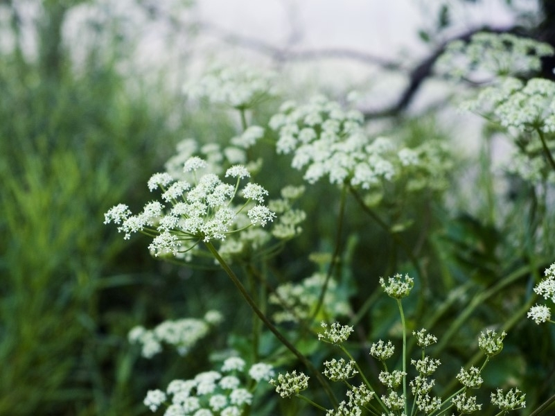 Штрафы за сорняки – стопроцентный фейк! Андрей Туманов успокоил дачников