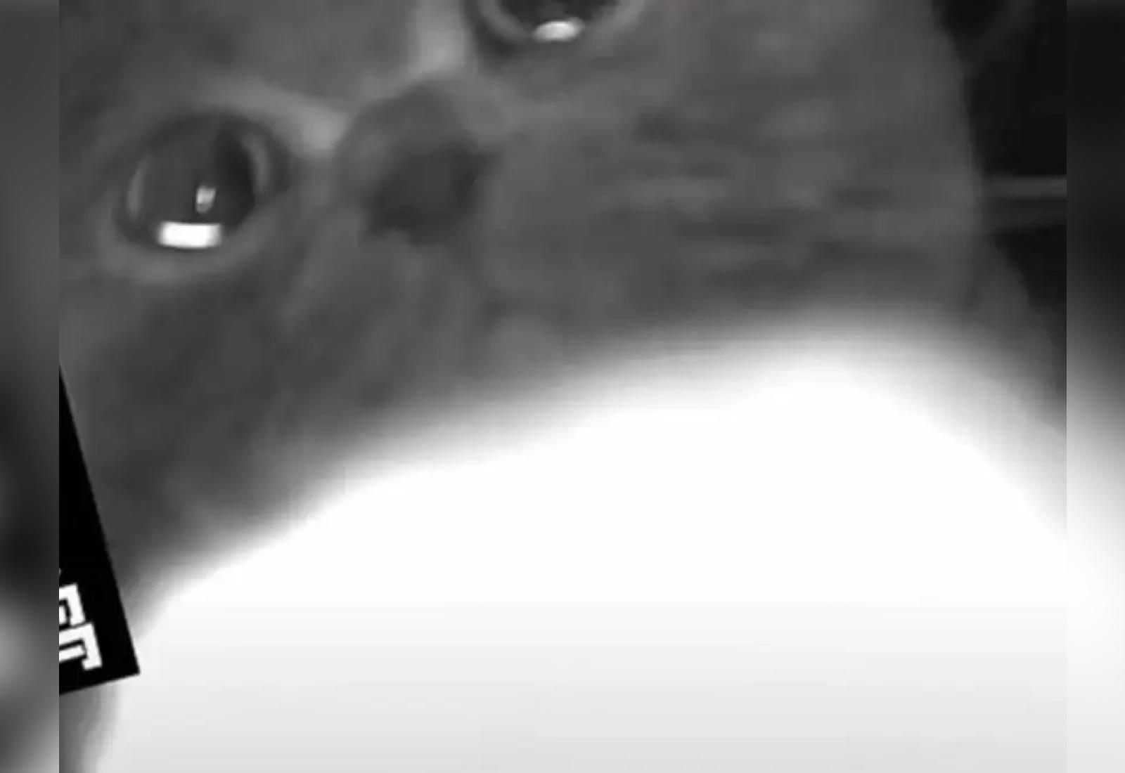 Хозяева уехали из дома и только благодаря камере узнали, какими горючими слезами плачет без них кот